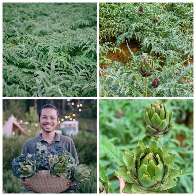 """Ngắm vườn rau xanh mướt giữa Đà Lạt của gia đình """"bỏ phố về rừng"""":  Không khí trong lành, rau sạch tươi tốt, ai cũng thích mê - Ảnh 7."""