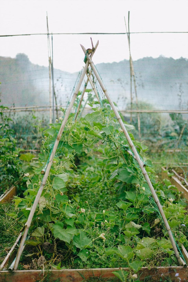"""Ngắm vườn rau xanh mướt giữa Đà Lạt của gia đình """"bỏ phố về rừng"""":  Không khí trong lành, rau sạch tươi tốt, ai cũng thích mê - Ảnh 9."""