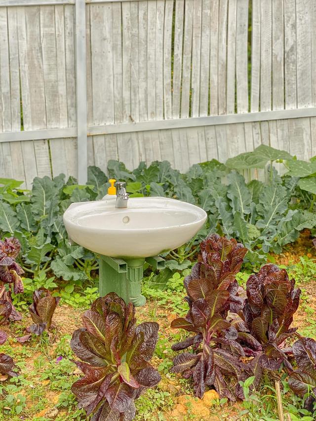 """Ngắm vườn rau xanh mướt giữa Đà Lạt của gia đình """"bỏ phố về rừng"""":  Không khí trong lành, rau sạch tươi tốt, ai cũng thích mê - Ảnh 12."""