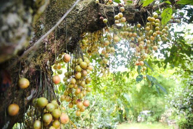 Mùa dâu da chi chít từ gốc đến ngọn, nông dân thu tiền triệu mỗi vụ - Ảnh 11.