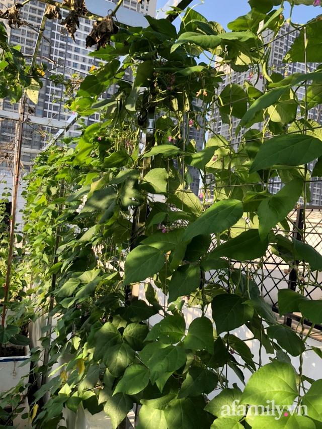 Vườn rau quả sạch 100m² trên mái nhà của mẹ 3 con ở Hà Nội - Ảnh 12.