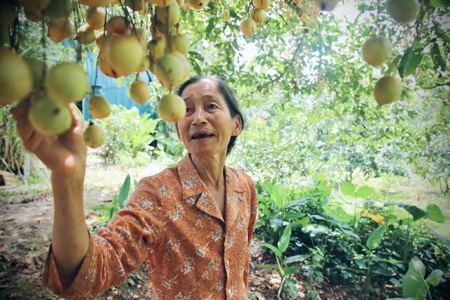 Mùa dâu da chi chít từ gốc đến ngọn, nông dân thu tiền triệu mỗi vụ - Ảnh 12.