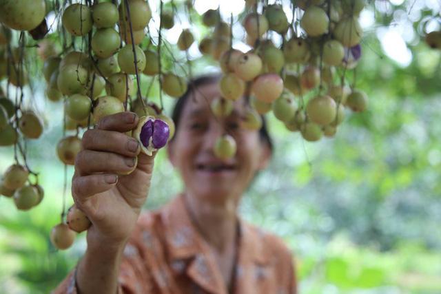 Mùa dâu da chi chít từ gốc đến ngọn, nông dân thu tiền triệu mỗi vụ - Ảnh 13.