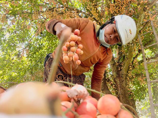 Mùa dâu da chi chít từ gốc đến ngọn, nông dân thu tiền triệu mỗi vụ - Ảnh 14.