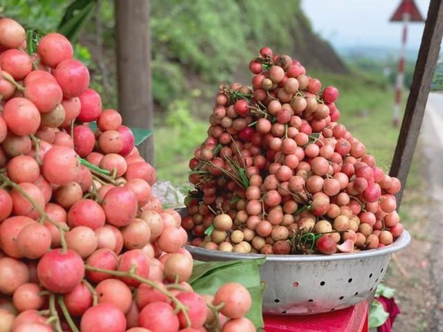 Mùa dâu da chi chít từ gốc đến ngọn, nông dân thu tiền triệu mỗi vụ - Ảnh 16.