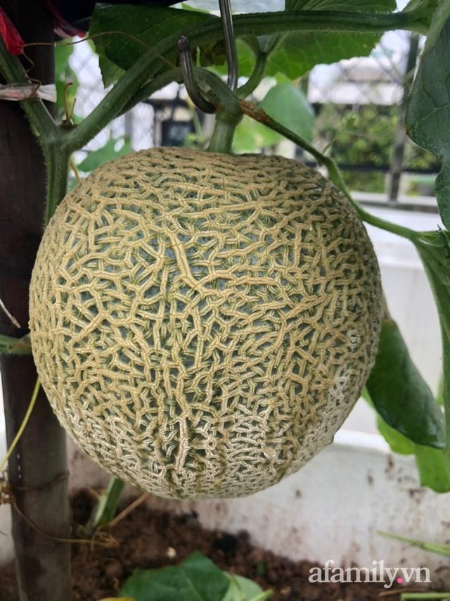 Vườn rau quả sạch 100m² trên mái nhà của mẹ 3 con ở Hà Nội - Ảnh 18.