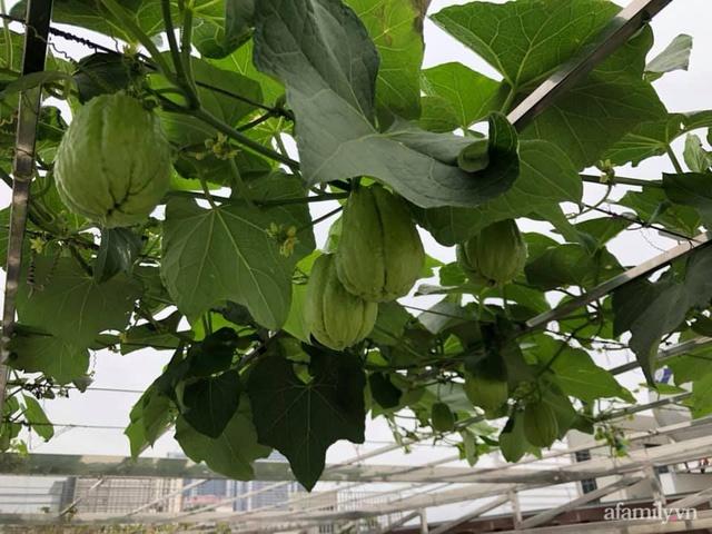 Vườn rau quả sạch 100m² trên mái nhà của mẹ 3 con ở Hà Nội - Ảnh 21.