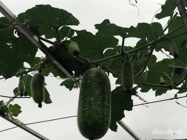 Vườn rau quả sạch 100m² trên mái nhà của mẹ 3 con ở Hà Nội - Ảnh 23.