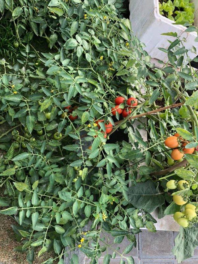 Vườn rau quả sạch 100m² trên mái nhà của mẹ 3 con ở Hà Nội - Ảnh 28.