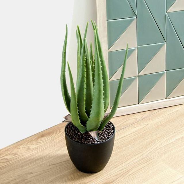 10 loại cây phong thủy trồng cho từng không gian của nhà phố, không cần nhiều ánh sáng, tưới ít nước vẫn tươi - Ảnh 5.