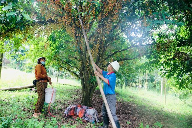 Mùa dâu da chi chít từ gốc đến ngọn, nông dân thu tiền triệu mỗi vụ - Ảnh 5.