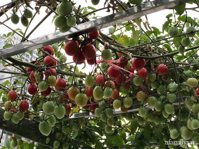 Vườn rau quả sạch 100m² trên mái nhà của mẹ 3 con ở Hà Nội - Ảnh 6.