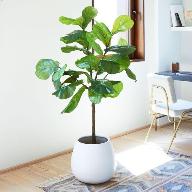 10 loại cây phong thủy trồng cho từng không gian của nhà phố, không cần nhiều ánh sáng, tưới ít nước vẫn tươi - Ảnh 6.