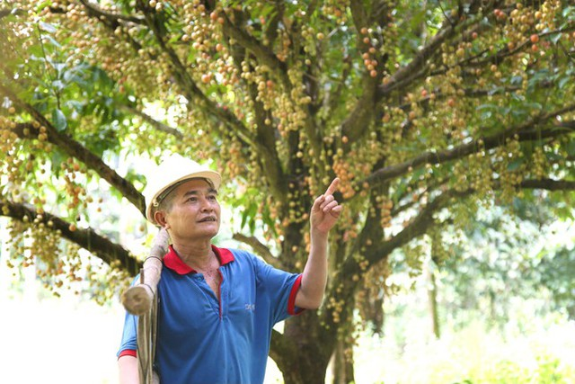 Mùa dâu da chi chít từ gốc đến ngọn, nông dân thu tiền triệu mỗi vụ - Ảnh 6.