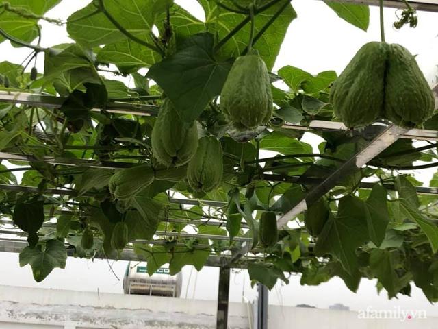 Vườn rau quả sạch 100m² trên mái nhà của mẹ 3 con ở Hà Nội - Ảnh 7.
