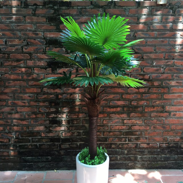 10 loại cây phong thủy trồng cho từng không gian của nhà phố, không cần nhiều ánh sáng, tưới ít nước vẫn tươi - Ảnh 7.