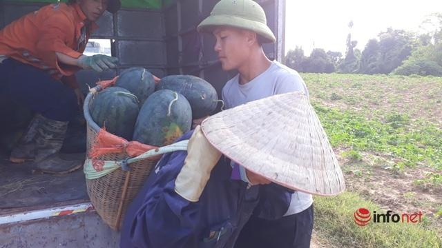 Giá dưa hấu Thanh Hóa rớt thảm, chỉ còn dưới 4.000 đồng/kg - Ảnh 7.