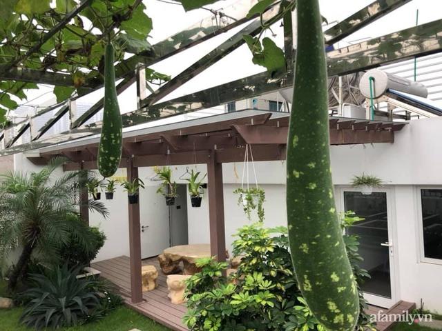 Vườn rau quả sạch 100m² trên mái nhà của mẹ 3 con ở Hà Nội - Ảnh 8.