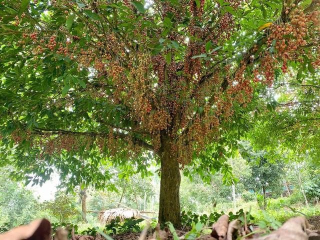 Mùa dâu da chi chít từ gốc đến ngọn, nông dân thu tiền triệu mỗi vụ - Ảnh 8.