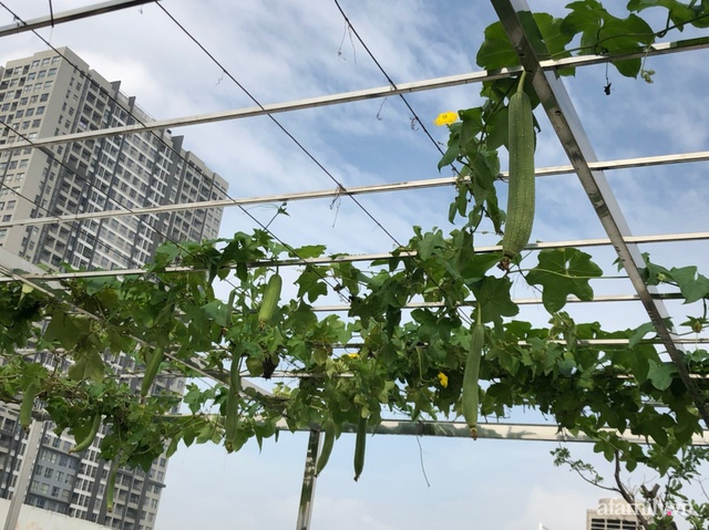 Vườn rau quả sạch 100m² trên mái nhà của mẹ 3 con ở Hà Nội - Ảnh 9.