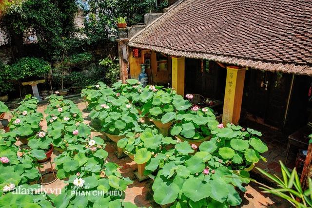 Đôi vợ chồng sở hữu căn nhà cổ 100 năm tuổi tại Hà Nội, sưu tập hàng trăm gốc sen cung đình Huế quanh nhà, ai đi qua cũng phải trầm trồ - Ảnh 1.