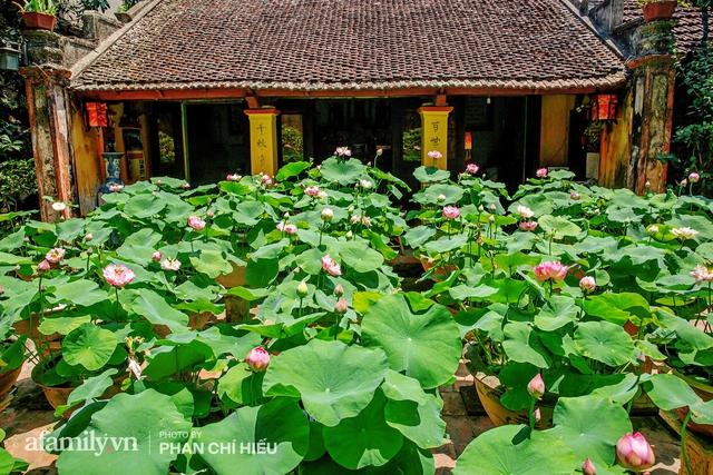 Đôi vợ chồng sở hữu căn nhà cổ 100 năm tuổi tại Hà Nội, sưu tập hàng trăm gốc sen cung đình Huế quanh nhà, ai đi qua cũng phải trầm trồ - Ảnh 11.