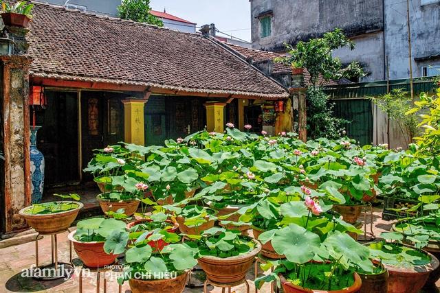 Đôi vợ chồng sở hữu căn nhà cổ 100 năm tuổi tại Hà Nội, sưu tập hàng trăm gốc sen cung đình Huế quanh nhà, ai đi qua cũng phải trầm trồ - Ảnh 15.