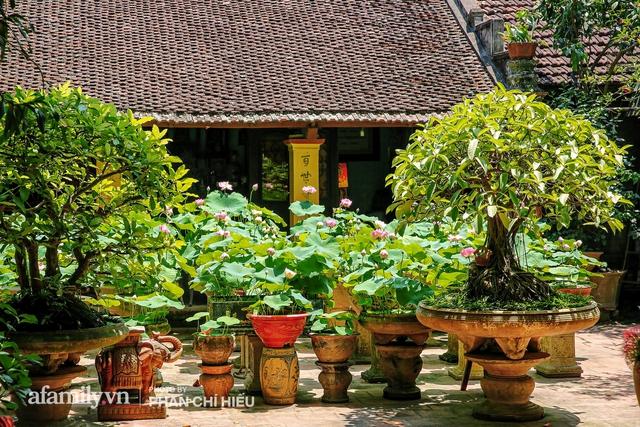 Đôi vợ chồng sở hữu căn nhà cổ 100 năm tuổi tại Hà Nội, sưu tập hàng trăm gốc sen cung đình Huế quanh nhà, ai đi qua cũng phải trầm trồ - Ảnh 5.