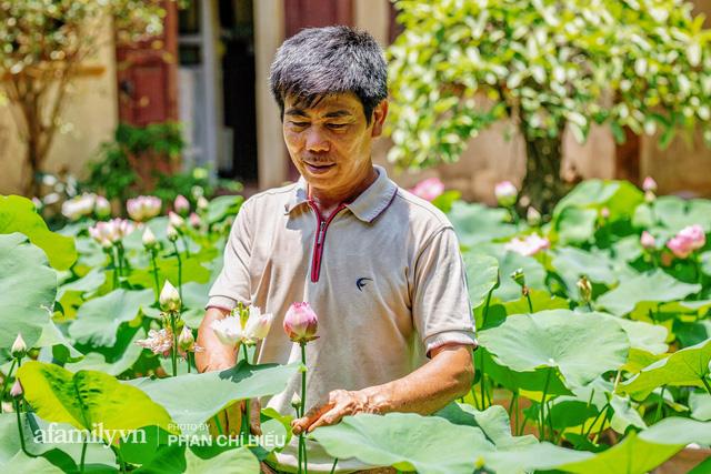 Đôi vợ chồng sở hữu căn nhà cổ 100 năm tuổi tại Hà Nội, sưu tập hàng trăm gốc sen cung đình Huế quanh nhà, ai đi qua cũng phải trầm trồ - Ảnh 8.