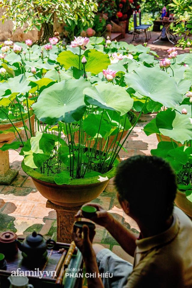 Đôi vợ chồng sở hữu căn nhà cổ 100 năm tuổi tại Hà Nội, sưu tập hàng trăm gốc sen cung đình Huế quanh nhà, ai đi qua cũng phải trầm trồ - Ảnh 9.