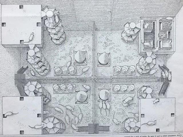 Thiên đường chuột: thí nghiệm về một xã hội thu nhỏ vẽ ra những kết luận rùng rợn về tương lai con người (Phần 1) - Ảnh 4.