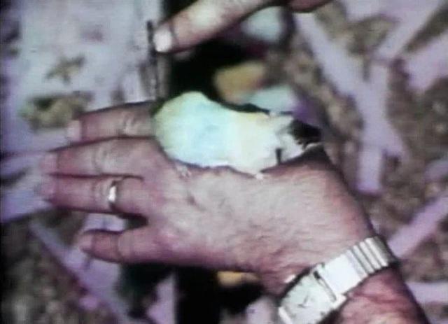 Thiên đường chuột: thí nghiệm về một xã hội thu nhỏ vẽ ra những kết luận rùng rợn về tương lai con người (Phần 1) - Ảnh 5.