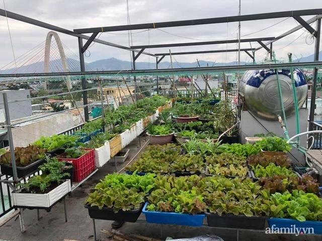 Sân thượng 100m² xanh tươi rau quả sạch của mẹ đảm ở Đà Nẵng - Ảnh 1.