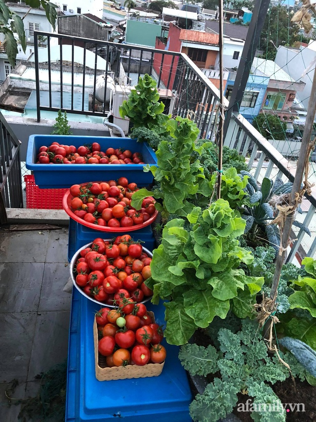 Sân thượng 100m² xanh tươi rau quả sạch của mẹ đảm ở Đà Nẵng - Ảnh 12.