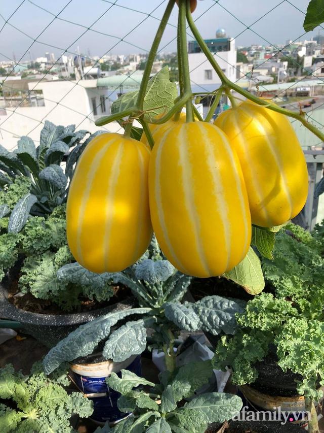 Sân thượng 100m² xanh tươi rau quả sạch của mẹ đảm ở Đà Nẵng - Ảnh 24.