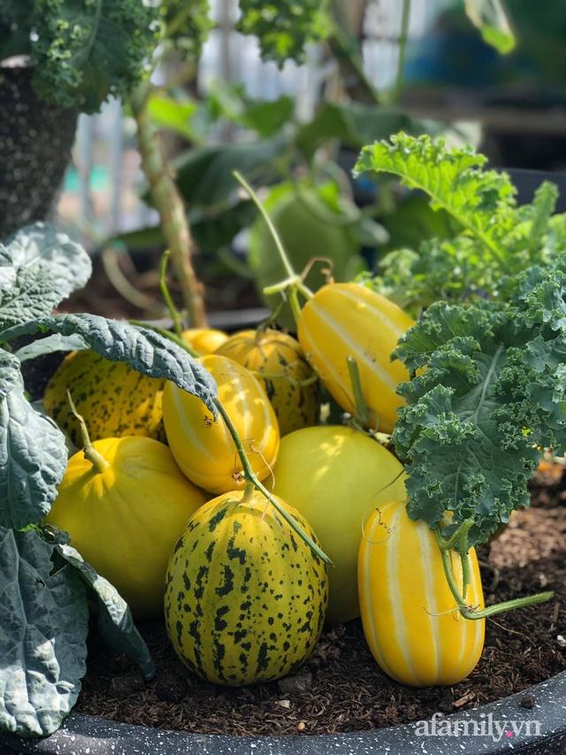 Sân thượng 100m² xanh tươi rau quả sạch của mẹ đảm ở Đà Nẵng - Ảnh 28.
