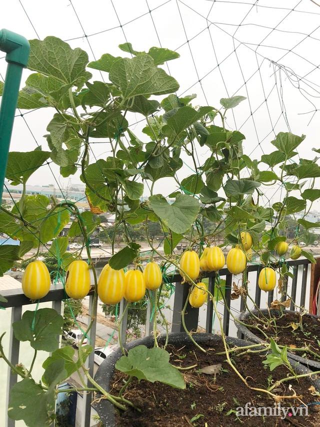 Sân thượng 100m² xanh tươi rau quả sạch của mẹ đảm ở Đà Nẵng - Ảnh 29.
