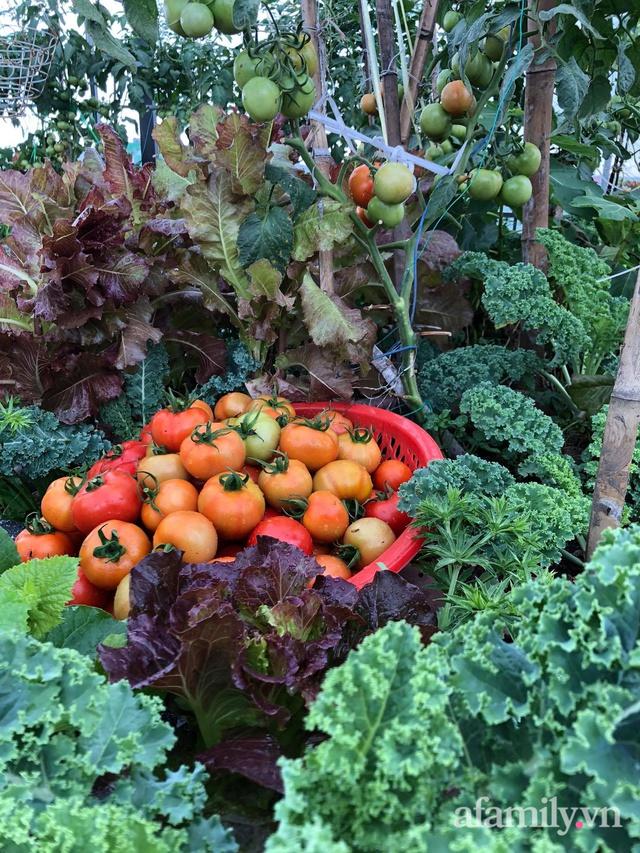 Sân thượng 100m² xanh tươi rau quả sạch của mẹ đảm ở Đà Nẵng - Ảnh 31.