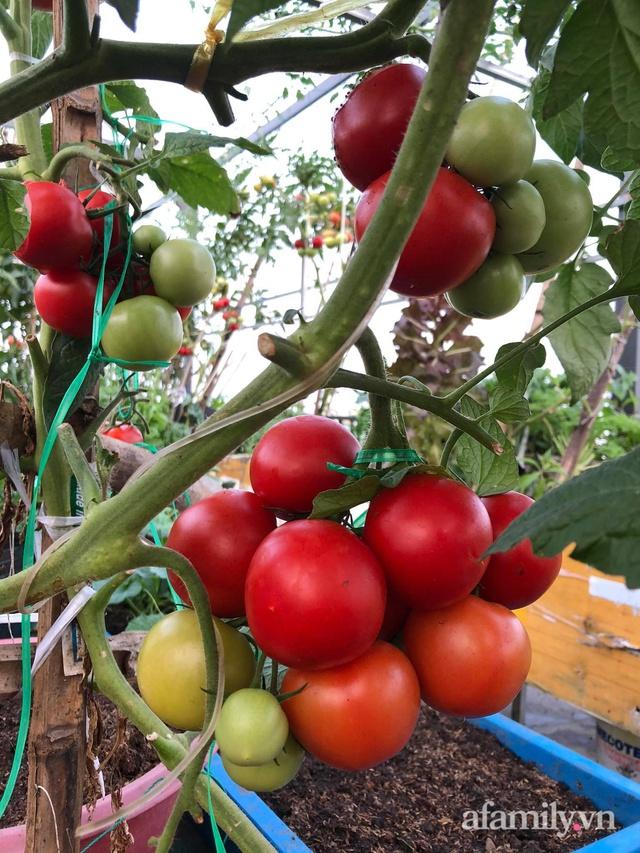 Sân thượng 100m² xanh tươi rau quả sạch của mẹ đảm ở Đà Nẵng - Ảnh 32.