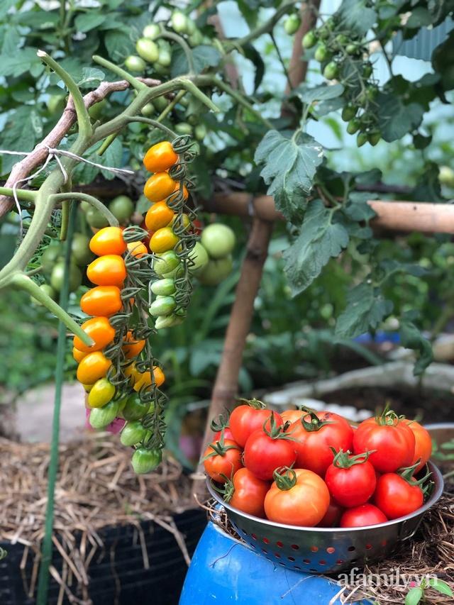 Sân thượng 100m² xanh tươi rau quả sạch của mẹ đảm ở Đà Nẵng - Ảnh 34.