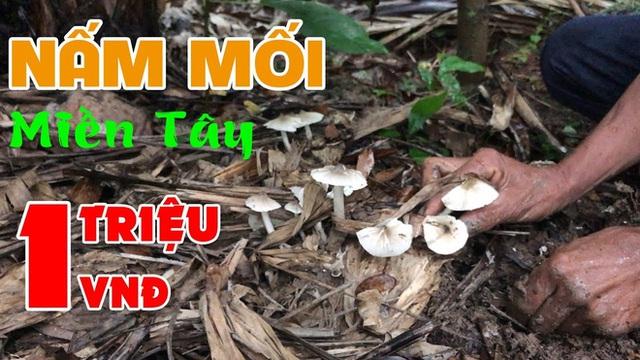 Việt Nam có loại nấm chỉ mọc hoang trong đúng 3 tháng, muốn hái không phải chuyện dễ nên giá bán lên tới cả triệu đồng 1 ký? - Ảnh 13.