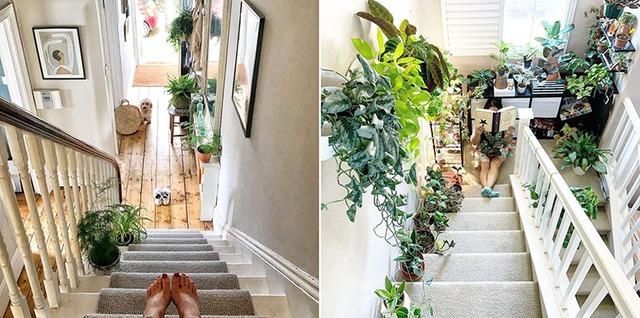 Hướng dẫn những vị trí đặt cây cảnh trong nhà tốt cho phong thủy - Ảnh 8.