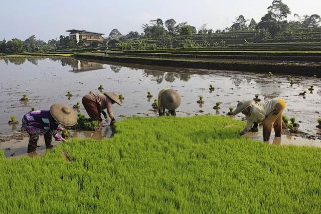 Mặt hàng chủ lực trong xuất khẩu của Việt Nam là lực cản làn sóng tăng giá lương thực toàn cầu - Ảnh 1.