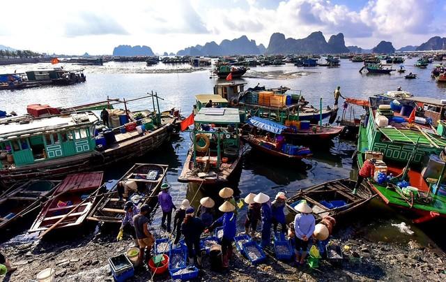 Quảng Ninh đóng cửa chợ đầu mối hải sản để chống dịch - Ảnh 1.