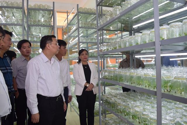 Quảng Nam đề xuất phát triển ngành công nghiệp sản xuất sâm Ngọc Linh - Ảnh 1.