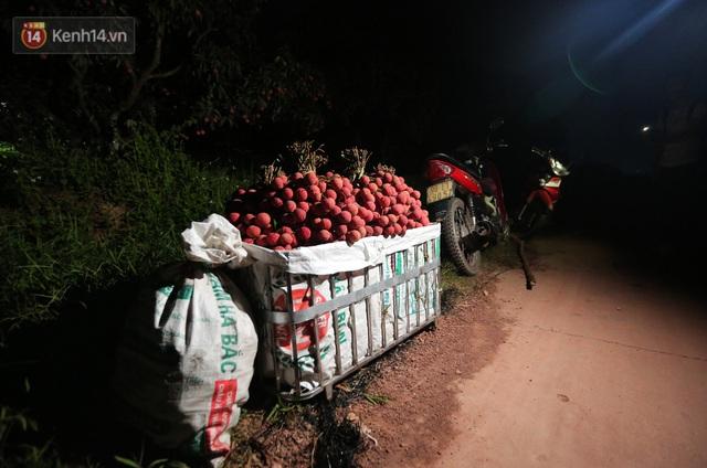 Ảnh: Người dân Bắc Giang thắp đèn từ 2 giờ sáng, đi thu hoạch vải thiều xuyên đêm - Ảnh 11.
