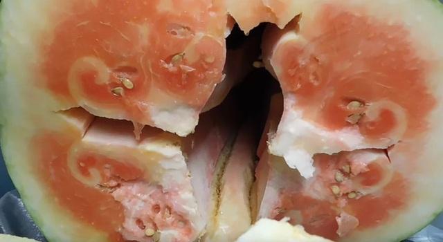 Trồng được trái dưa hấu nặng gần 130kg, tới lúc xẻ ra ăn, người đàn ông nước ngoài mới chết lặng vì cảnh tượng bên trong - Ảnh 5.
