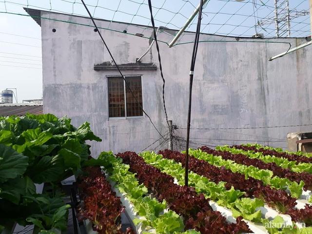 Dù không có sân thượng nhưng mẹ đảm ở Sài Gòn vẫn có được vườn nông sản xanh mướt trên mái tôn - Ảnh 1.
