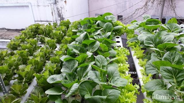 Dù không có sân thượng nhưng mẹ đảm ở Sài Gòn vẫn có được vườn nông sản xanh mướt trên mái tôn - Ảnh 2.