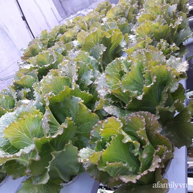 Dù không có sân thượng nhưng mẹ đảm ở Sài Gòn vẫn có được vườn nông sản xanh mướt trên mái tôn - Ảnh 13.